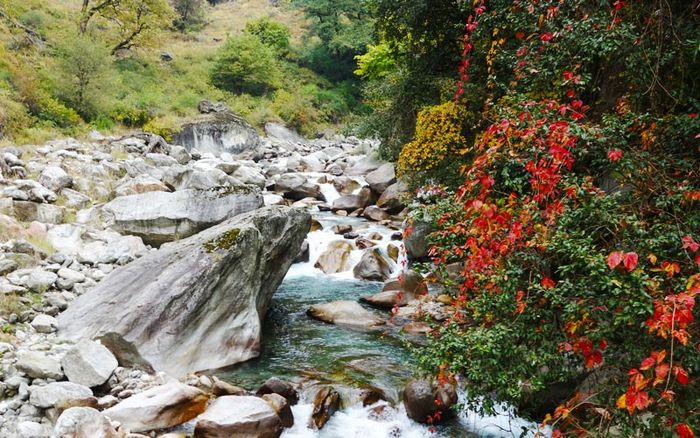 Tirthan Valley Trek to Great Himalayan National Park [Price on Request]