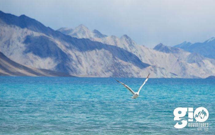 Manali – Ladakh – Srinagar : Amazing ride on top of the world