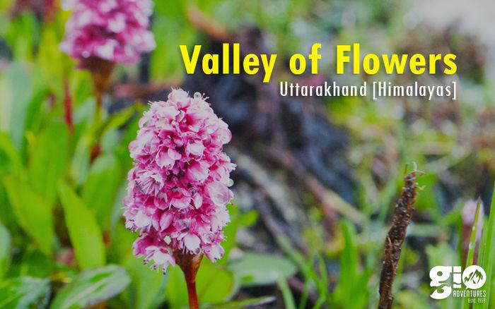 Valley of flowers & Hemkund Sahib Trek for Women
