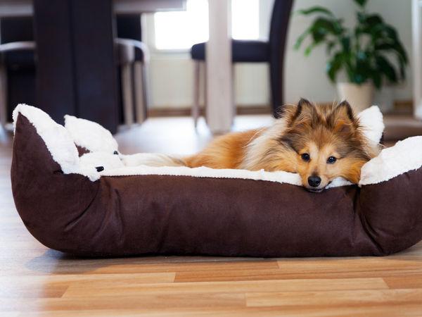 Welchen Hundekorb soll ich kaufen?