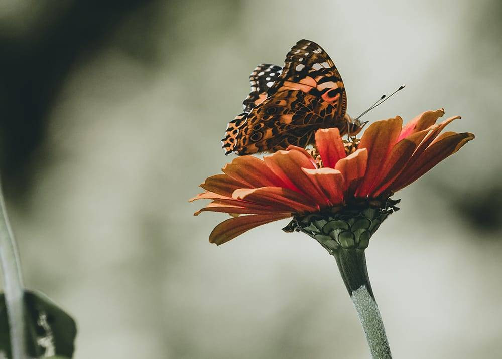 Close up view of flower with butterfly