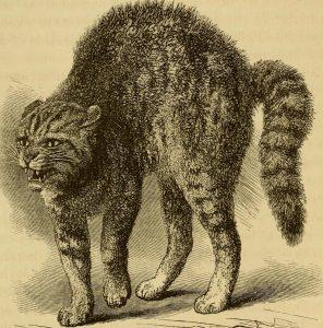 cat 33667
