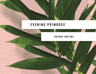 eveningprimrose 25a43