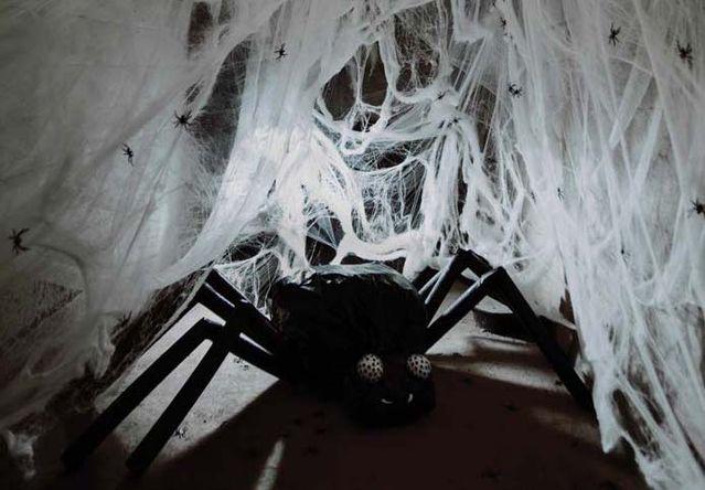 spidercrop 4c7e7