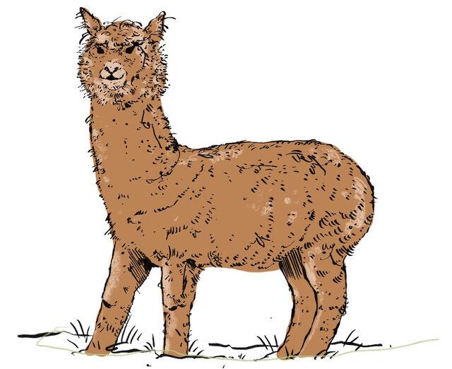 fabric alpaca 49642
