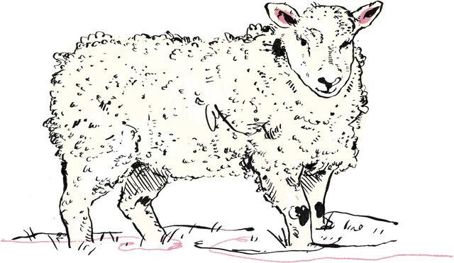 fabric sheep 42ba4