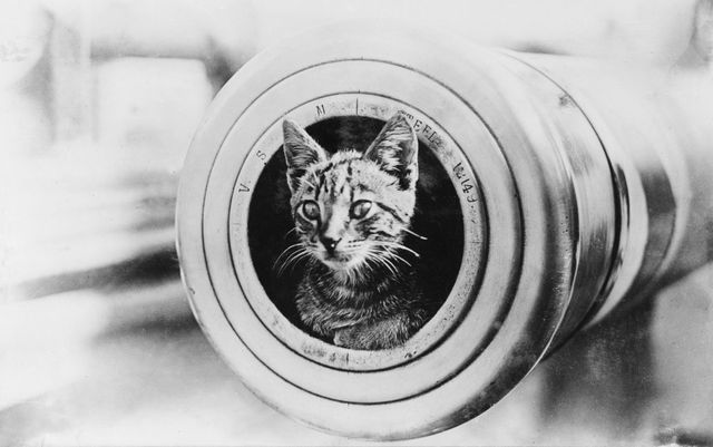 encountere2808de2808ae2808bs ships cat sitting in the muzzle of a 6 inch gun 1024x642 7afec