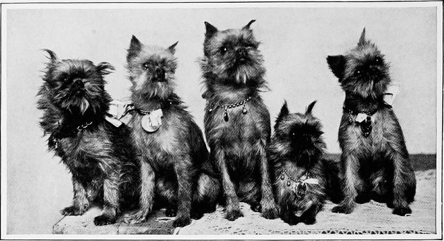 group of cropped griffins from the new book of the dog 1907 e3f79
