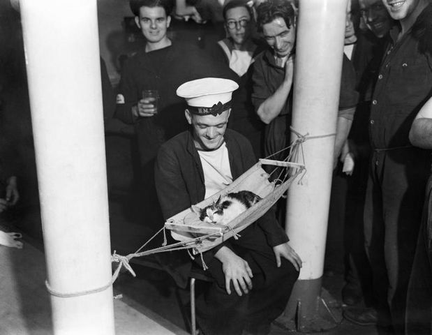 sailors surround the ships cat convoy asleep in a miniature hammock on board hms hermione gibraltar 26 november 1941 image via imperial war museum 8ebfa