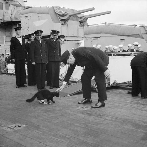 winston churchill stops blackie ships cat of hms prince of wales crossing over to a us destroyer during the atlantic conference august 1941 image via imperial war museum dd6d8