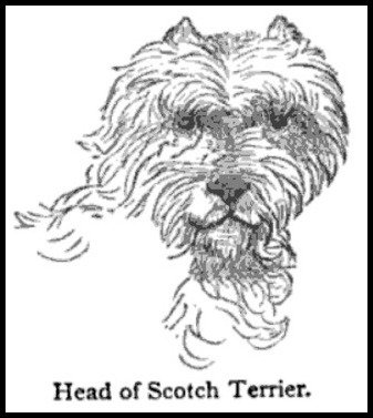head of a scotch terrier via the young folks cyclopc3a6dia of common things 1880 c8824