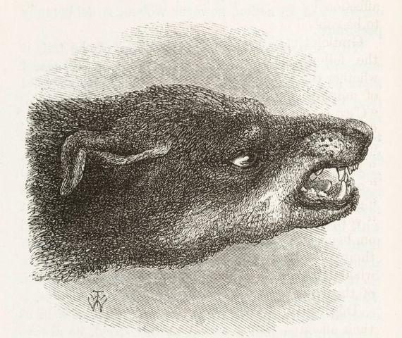 snarling dog 67466
