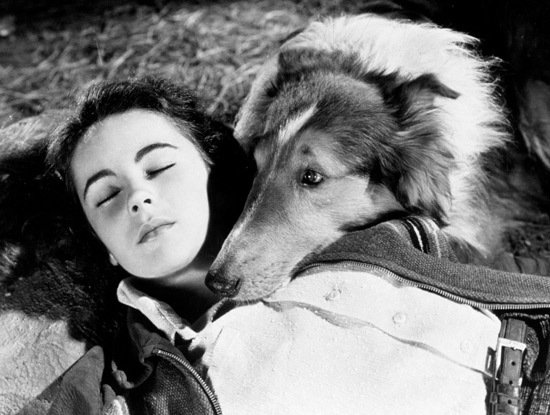 elizabeth taylor and pal lassie come home 1943 ec1ff