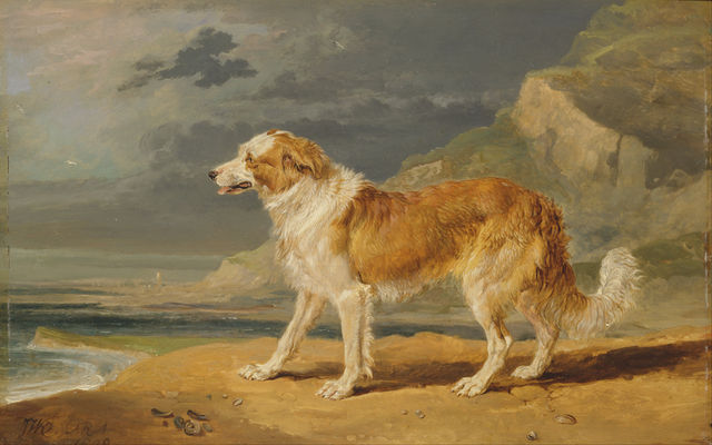rough coated collie by james ward 1809 f9a38