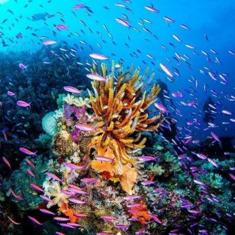 oceans 33866