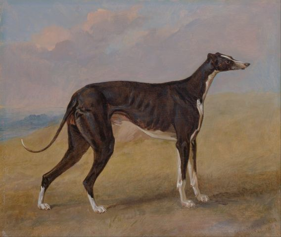 turk a greyhound the property of george lane fox by george garrard 1822 768x649 3a6e2
