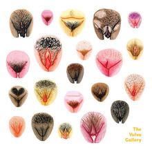 Hilde Atalanta The Vulva Gallery Vulva Diversity III s 68efa