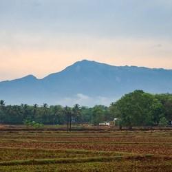 Farm in Kerala India 0629d