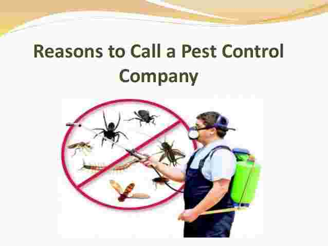 Reasons to Call a Pest Control Company