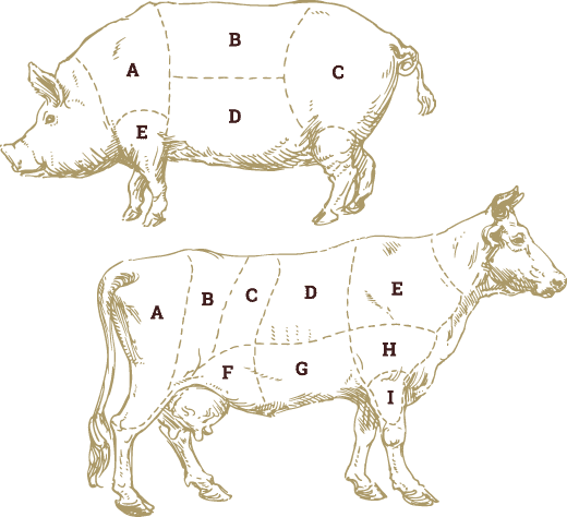 Meat cuts and grading illustration