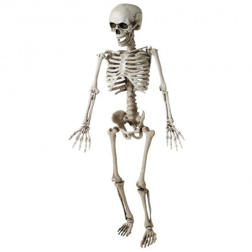 Skelet Voor Halloween.Skelet