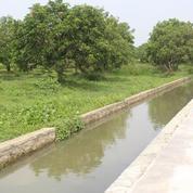 Tanah Dan Pohon Mangga (10987277) di Kab. Karawang