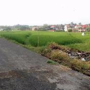 Tanah Di Ubung Murah Meriah (11118057) di Kota Denpasar
