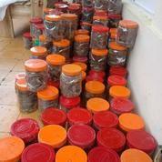 Ternak Semut Merah Media Stoples (11233421) di Kab. Garut