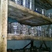 Ternak Semut Merah (11241555) di Kab. Ciamis