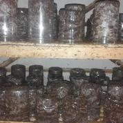 Berternak Semut Rang Rang (11241651) di Kab. Ciamis