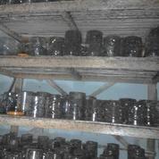 Ternak Semut Merah (11241837) di Kab. Ciamis