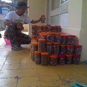 Berternak Semut Rang Rang (11243017) di Kab. Tasikmalaya