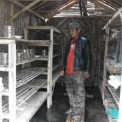 Ternak Semut Merah Media Stoples (11243161) di Kab. Tasikmalaya