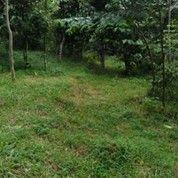 Tanah Bentuk Kebun Lokasi Masuk Mobil (11297441) di Kab. Sukabumi
