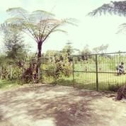 Mekarsari Residence Kawasan Pariwisata Bedugul (11426063) di Kab. Tabanan