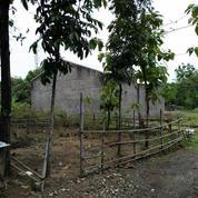 Tanah Kering 488 M2 Didaerah Ngringo, Palur, Surakarta (11926215) di Kab. Karanganyar
