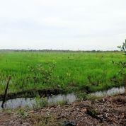 Tanah Kebun Murah (12471491) di Kab. Tulang Bawang