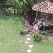 Sewa Villa Di Puncaj Type Belanda 4 Kamar Tidur
