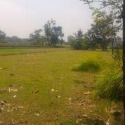 Tanah Luas 1000m2 Ld 15m Paingan (12574583) di Kota Yogyakarta