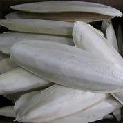 Asinan Tulang Sotong Cemilan Buat Burung Gacorkan N Kalsium (12630823) di Kota Medan