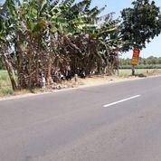 Tanah Dekat Calon Bandara Baru Jogja (NYIA) Jl. Daendels (13315311) di Kota Yogyakarta