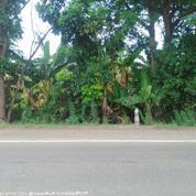 Tanah Luas 5 Hektar Di Jalan Pantura Tegal Pemalang