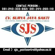 Jasa Pest, Rodent, Termite Control & Fumigasi