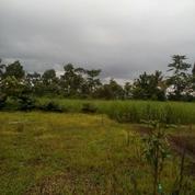 Tanah Kavling Murah Di Batu Malang