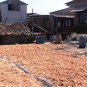 Tepung Ikan Asli Pesisir Kota Semarang Tanpa Campuran (139015) di Kota Semarang