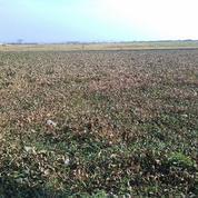 Tanah Gebang 10 Hektar Untuk Industri