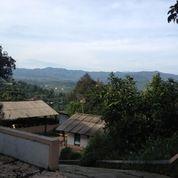 Vila Dengan Peternakan Sapi
