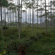 Tanah Luas Kebun Jati Pinggir Jalan (14329247) di Kab. Bandung