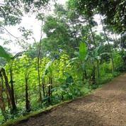 Tanah Yang Cocok Untuk Perumahan Di Cileunyi (14473013) di Kota Bandung