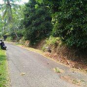 Tanah Pinggir Jalan Murah Di Kiarapedes Purwakarta 2000 M2 Ada 2 Pohon Manggis (14754703) di Kab. Purwakarta